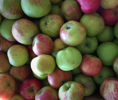 A Gravenstein applesauce story