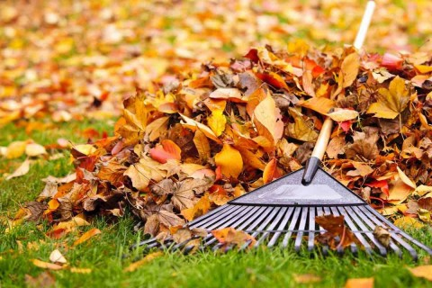 peggy-kornegger-raking-leaves
