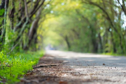 Panache-Desai-The-Middle-Path