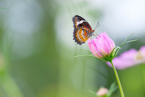 What is Standing Between You and Who You Deserve to Be - Chasing Moonbeams and Butterflies
