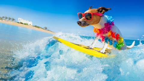 dog-surfing-on-a-wave-picture-id912592258