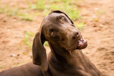dogquestion