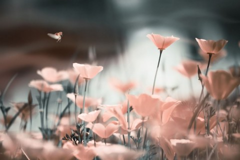 blurred-floral-background-in-grunge-style-with-poppies-picture-id589133320