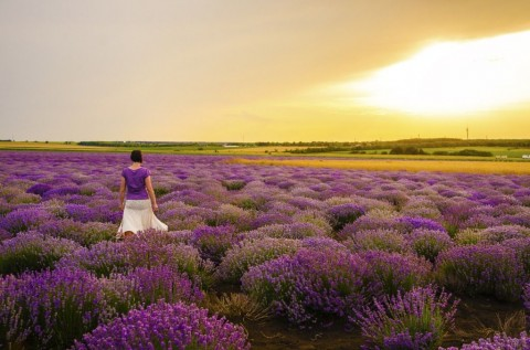 girl-in-a-lavender-field-picture-id466512185