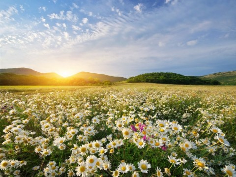 spring-daisy-flowers-picture-id915614956