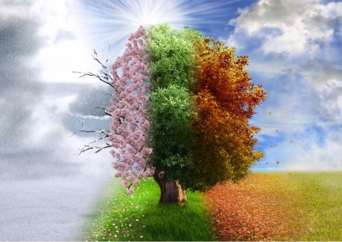 four-season-tree-photo-manipulation-magical-nature-picture-id531535355