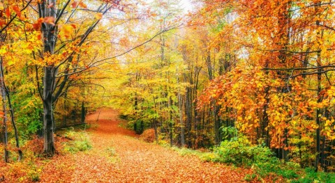 beautiful-view-of-the-forest-on-a-sunny-day-autumn-landscape-ukraine-picture-id846704638