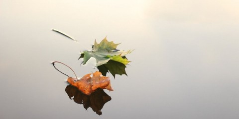 maple-leaves-690233_1920-1