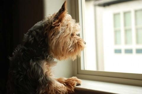 dog-at-window