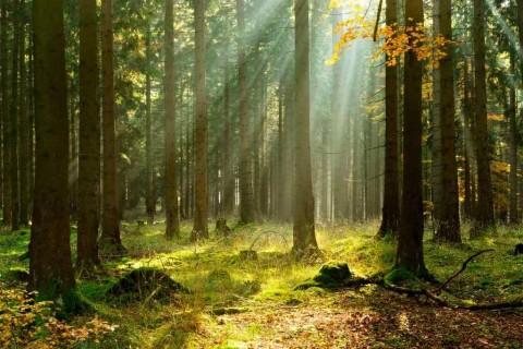 sunlitforest