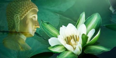 flowerbuddha