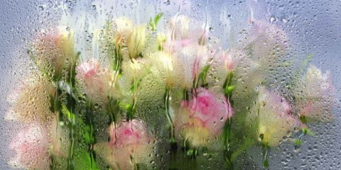 blurred-roses-behind-of-a-window-with-water-drops-picture-id1209026466