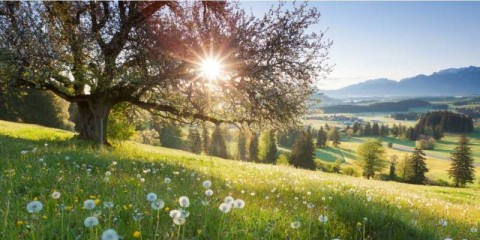backlight-view-through-apple-tree-summer-meadow-in-bavaria-germany-picture-id182027571