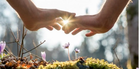 hand-covering-flowers-at-the-garden-with-sunlight-picture-id492623216