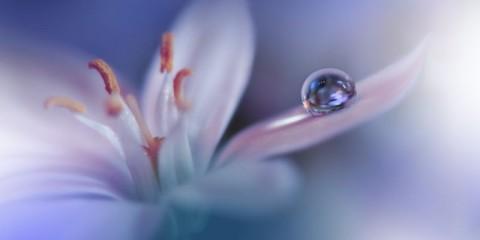 beautiful-nature-backgroundmacro-shot-of-amazing-spring-flowersart-picture-id1150412944