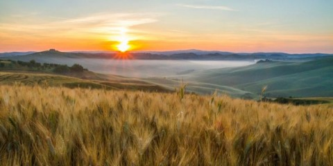 scenic-view-of-wheat-crops-growing-in-fields-picture-id665064618