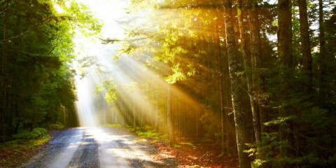 sunflare-on-road-picture-id94502345