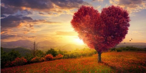 red-heart-shaped-tree-picture-id542701780