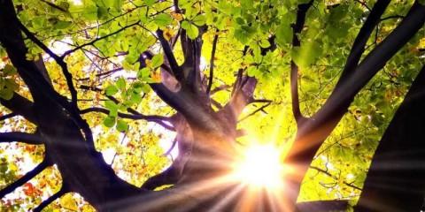 light-in-a-tree