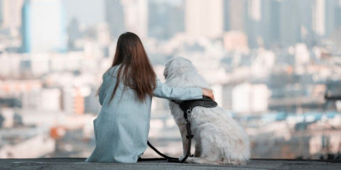 love_pet