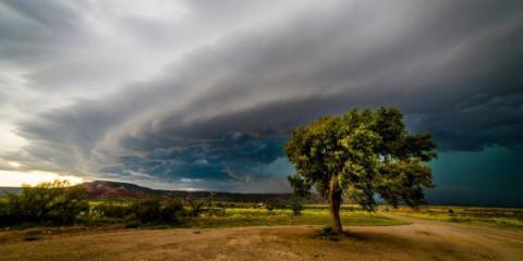 tree-versus-storm
