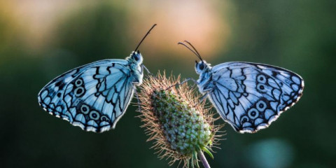 beautiful-butterfly-picture