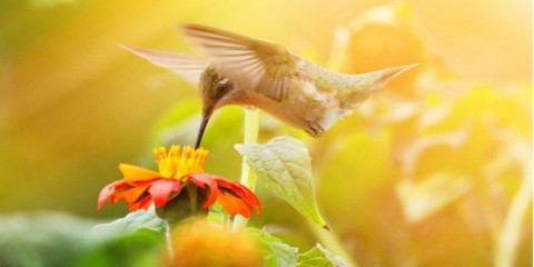 hummingbird_selfcare